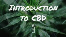 Introduction to CBD Blog